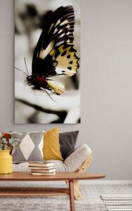 obraz na szkle motyl